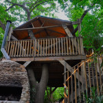 Tree-House-Front