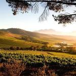 View-of-Jordan-Wine-Estate