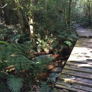 Goesa trail